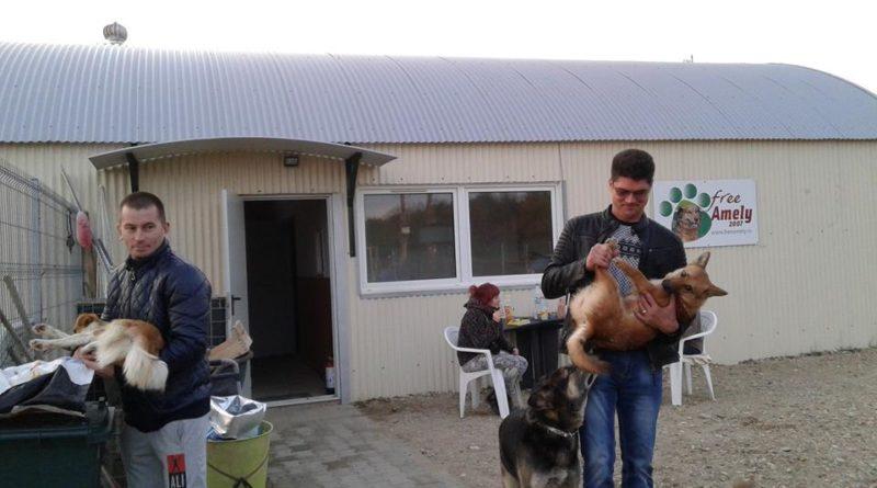 """Lugoj Expres Campanie de sterilizare gratuită a câinilor, la adăpostul Asociației """"Free Amely 2007"""" sterilizare Seelen für Seelchen microcip castrare gratuită campanie câini Asociația Free Amely 2007 Lugoj adăpost"""