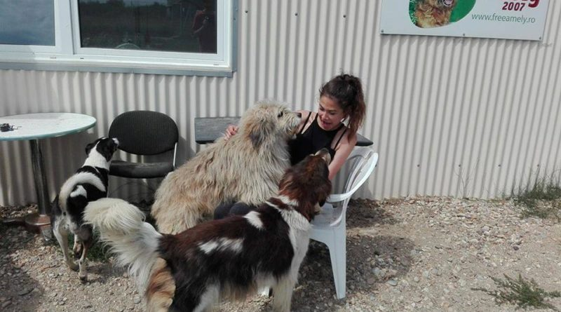 "Lugoj Expres Porți deschise la Asociația ""Free Amely 2007"" Lugoj, de Ziua Internațională a Animalelor Ziua Internațională a Animalelor Asociația Free Amely 2007 Lugoj adoptă un animal"