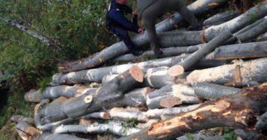 Lugoj Expres Tăieri ilegale de lemne în zona Făgetului. Trei bărbați, prinși de jandarmi la Pietroasa tăieri ilegale de arbori jandarmii ifracțiuni silvice Făget