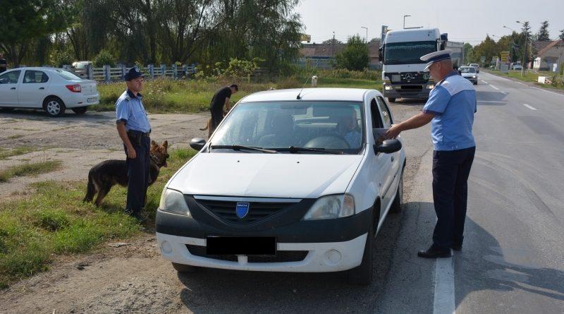 Lugoj Expres Peste 300 de sancțiuni pentru șoferii indisciplinați șoferi indisciplinați sancțiuni polițiștii permise de conduceren infracțiuni accidente abateri rutiere