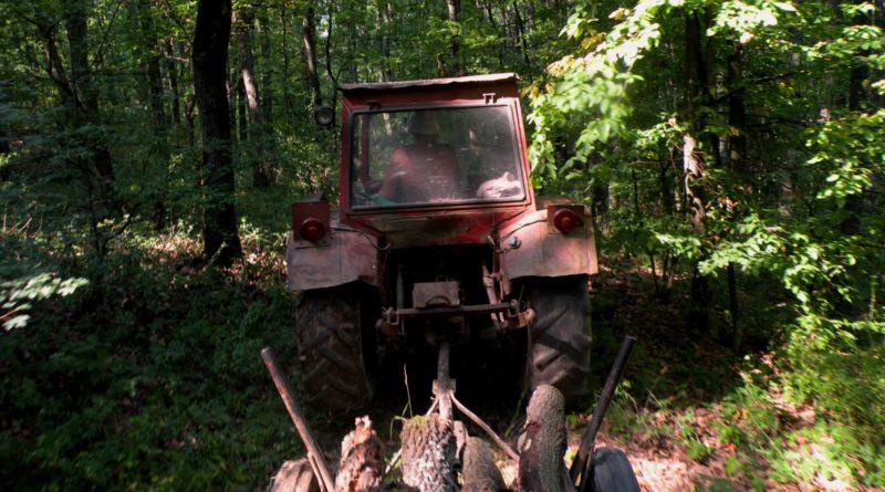 Lugoj Expres Pedeapsă aspră pentru un transport ilegal de lemne pedeapsă aspră lemne furate.