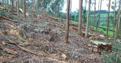 Lugoj Expres Pădure defrișată lângă Făget: 120 de copaci tăiați ilegal tăieri ilegale de arbori păduri defrișate pădure lângă Făget jandarmii timișeni fondul forestier