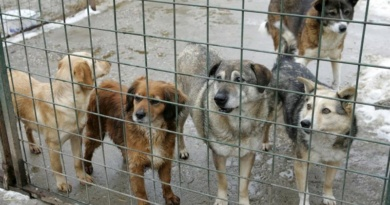 """Lugoj Expres Porți deschise la adăpostul Asociației """"Free Amely 2007"""" Lugoj, de Ziua internațională a animalelor fără stăpân ziua porților deschise Ziua internațională a animalelor fără stăpân Asociația Free Amely 2007 Lugoj adoptă un câine"""