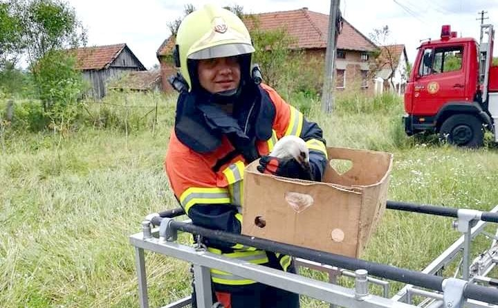 Lugoj Expres Pompierii lugojeni au salvat... un pui de barză căzut din cuib