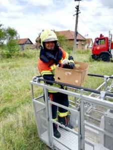 Lugoj Expres Pompierii lugojeni au salvat... un pui de barză căzut din cuib   Lugoj Expres Pompierii lugojeni au salvat... un pui de barză căzut din cuib   Lugoj Expres Pompierii lugojeni au salvat... un pui de barză căzut din cuib