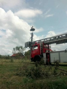 Lugoj Expres Pompierii lugojeni au salvat... un pui de barză căzut din cuib   Lugoj Expres Pompierii lugojeni au salvat... un pui de barză căzut din cuib   Lugoj Expres Pompierii lugojeni au salvat... un pui de barză căzut din cuib   Lugoj Expres Pompierii lugojeni au salvat... un pui de barză căzut din cuib
