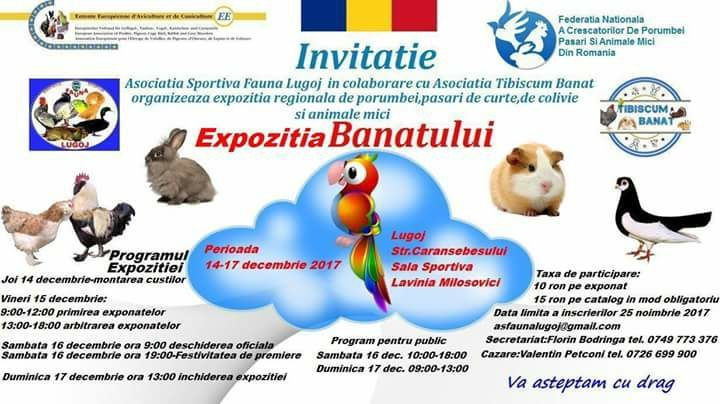 Lugoj Expres Expoziție de porumbei, păsări exotice și animale mici porumbei păsări exotice păsări de curte Fauna expoziție animale mici