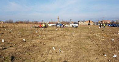 Lugoj Expres Rotary plantează, din nou, la Lugoj salcâm Rotary plantează Rotary Lugoj Rotary puieți de salcâm pădure Lugoj arbori
