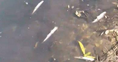 Lugoj Expres Pești morți pe râul Timiș, în zona Jabăr. Garda de Mediu face verificări satația de epurare Lugoj râul Timiș pești morți rârl Timiș pești morți Jabăr pești morți pești Lugoj Jabăr Garda de Mediu