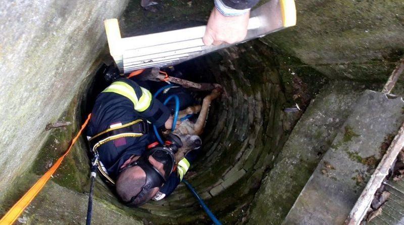 Lugoj Expres Câine căzut într-o fântână, salvat de pompieri pompieri ISU Timiș intervenție fântână dispărut câzut în fântână câne Buziaș