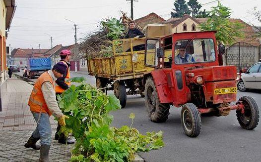 Lugoj Expres Curățenia de toamnă începe la sfârșit de octombrie, la Lugoj Salprest Lugoj Lugojul Român Lugojul German Lugoj curățenia de toamnă