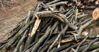 Lugoj Expres Dosar penal pentru un bărbat care a tăiat ilegal lemne dintr-o pădure tăieri ilegale tăiat lemne restricții de circulație pădure Ohaba Lungă lemne Făget dosar penal amendă