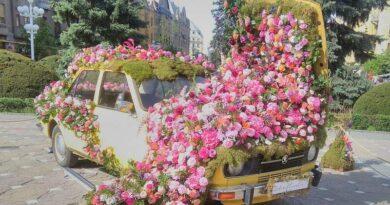 Lugoj Expres Caroserie de autoturism, transformată în... aranjament floral piața Lugoj Dacia 1300 caroserie autoturism aranjament floral