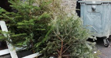 Lugoj Expres Acțiune de colectare a brazilor de Crăciun strângere Lugoj colectare brazi de Crăciun brazi aruncați acțiune